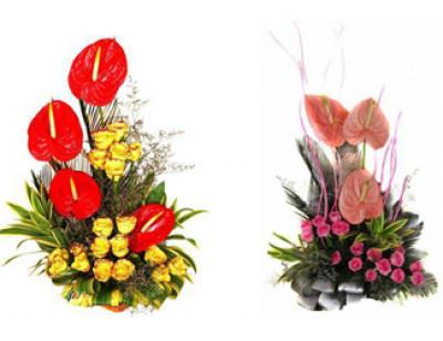 Rose N Petals India