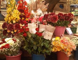 Surjit Flowers